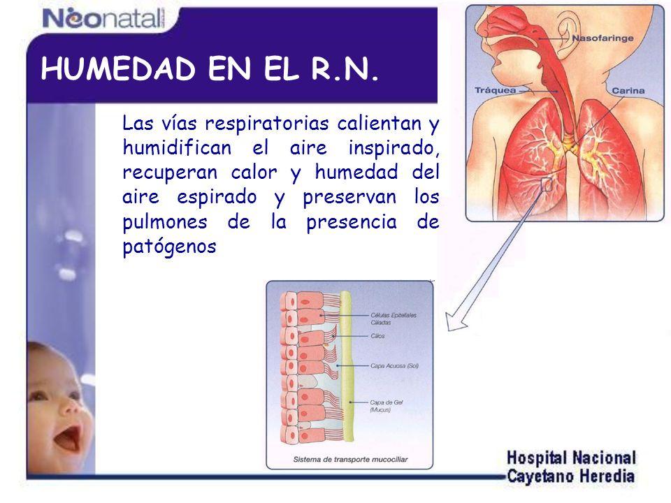 HUMEDAD EN EL R.N.