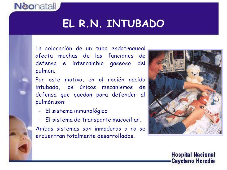 EL R.N. INTUBADO La colocación de un tubo endotraqueal afecta muchas de las funciones de defensa e intercambio gaseoso del pulmón.