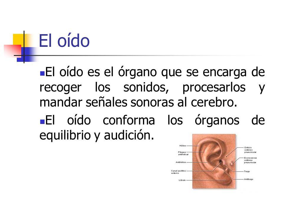 El oído El oído es el órgano que se encarga de recoger los sonidos, procesarlos y mandar señales sonoras al cerebro.