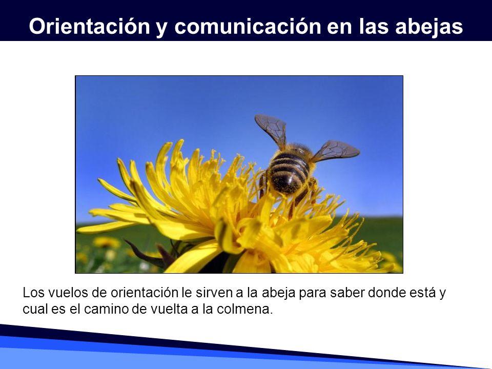 Orientación y comunicación en las abejas