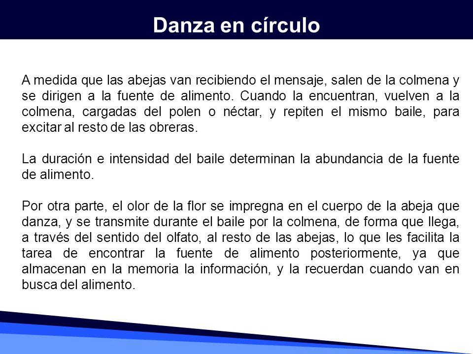 Danza en círculo