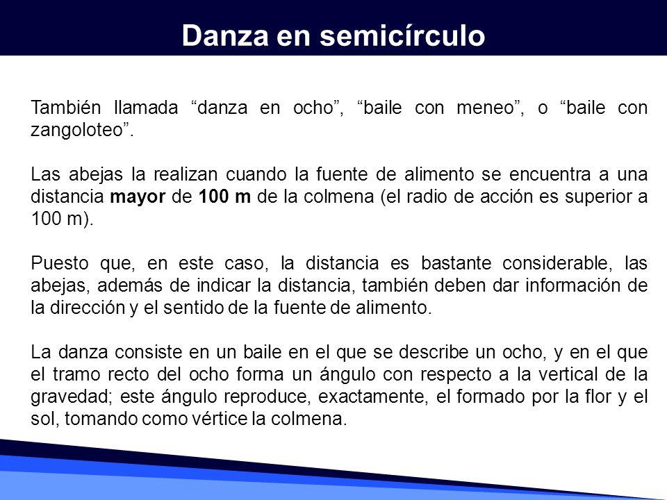 Danza en semicírculo También llamada danza en ocho , baile con meneo , o baile con zangoloteo .