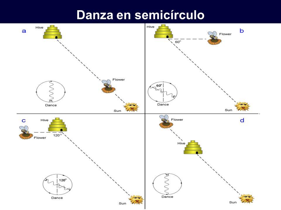 Danza en semicírculo