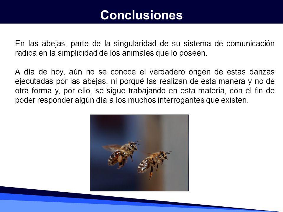 Conclusiones En las abejas, parte de la singularidad de su sistema de comunicación radica en la simplicidad de los animales que lo poseen.