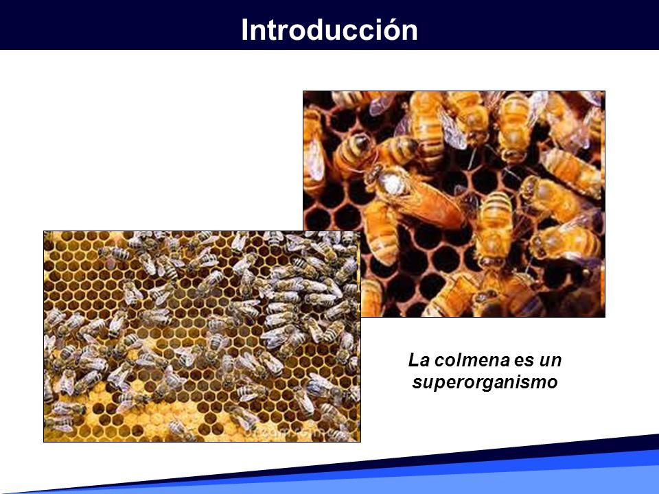 La colmena es un superorganismo