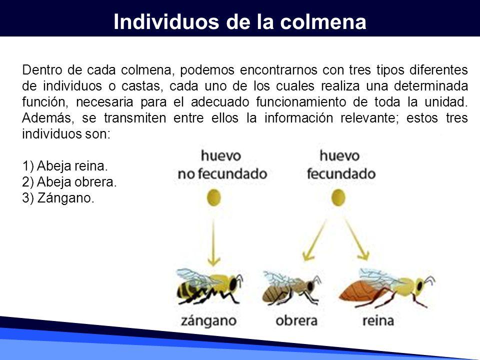 Individuos de la colmena