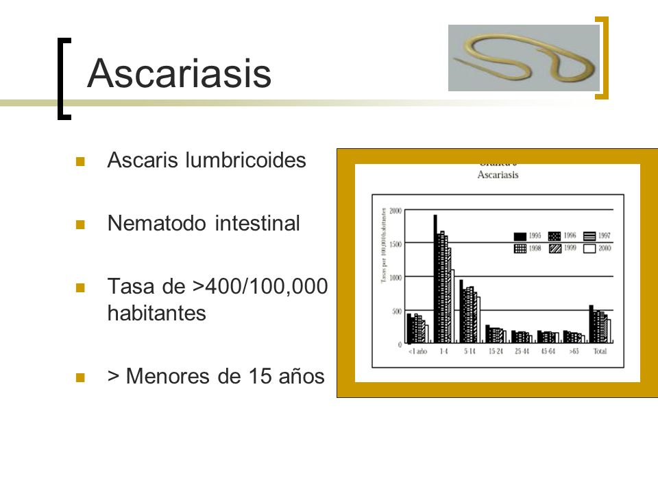 Ascariasis Ascaris lumbricoides Nematodo intestinal