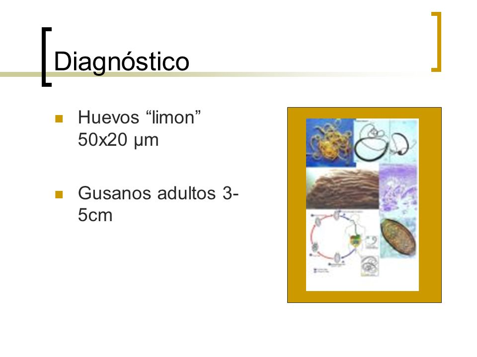 Diagnóstico Huevos limon 50x20 μm Gusanos adultos 3-5cm