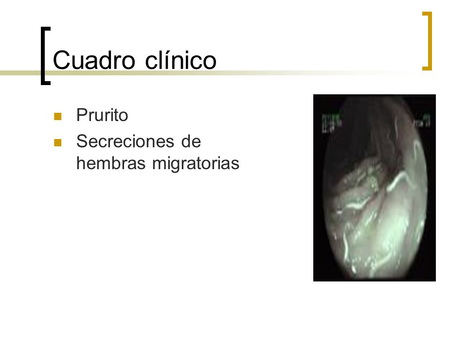 Cuadro clínico Prurito Secreciones de hembras migratorias
