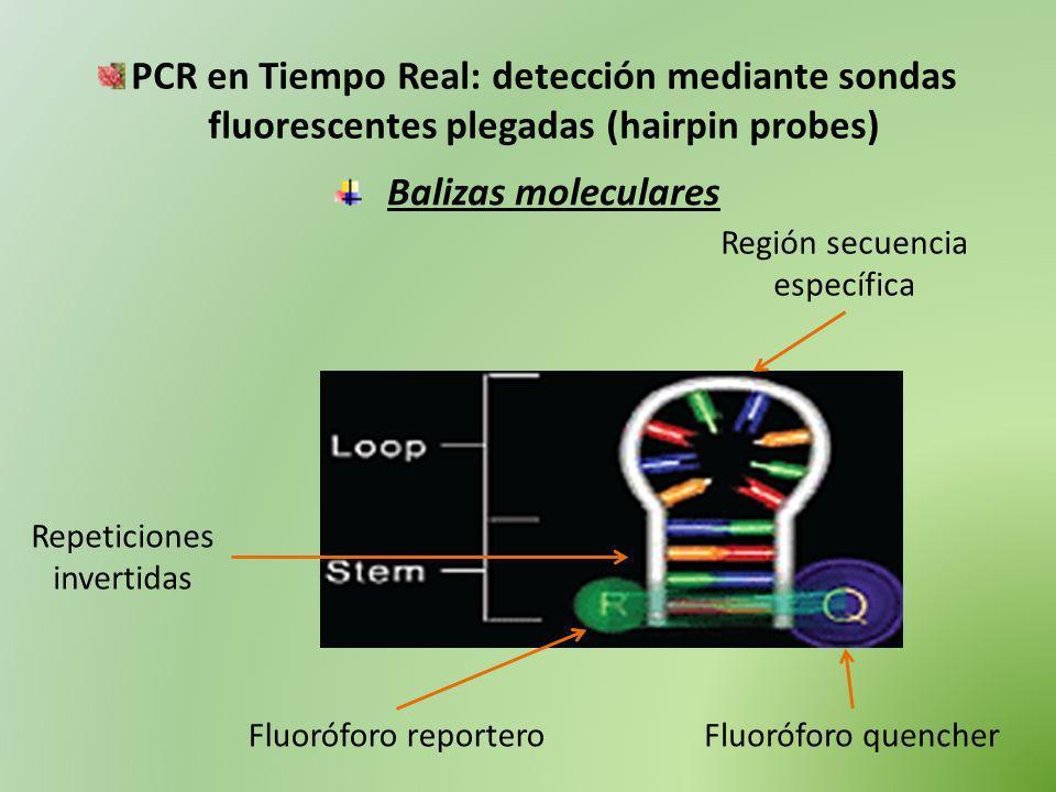 PCR en Tiempo Real: detección mediante sondas fluorescentes plegadas (hairpin probes)