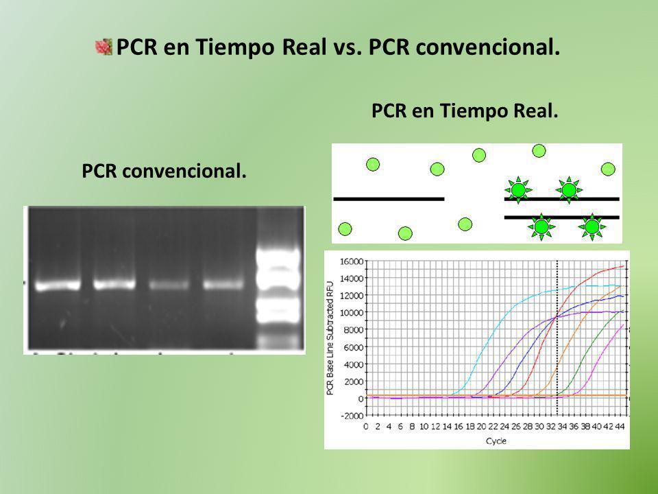 PCR en Tiempo Real vs. PCR convencional.