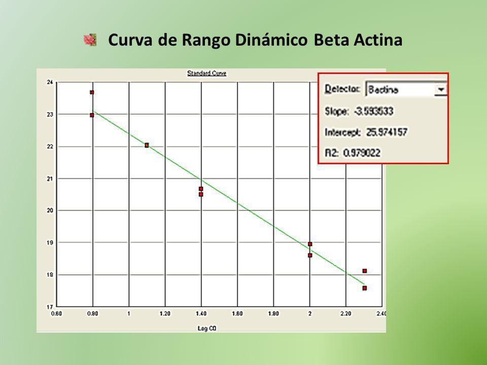 Curva de Rango Dinámico Beta Actina