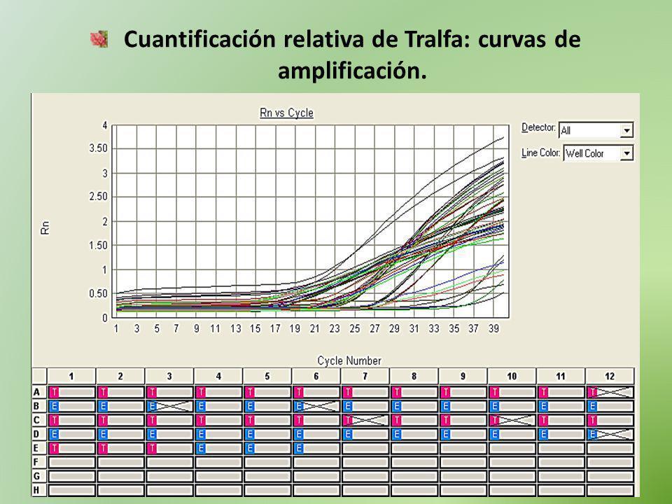 Cuantificación relativa de Tralfa: curvas de amplificación.