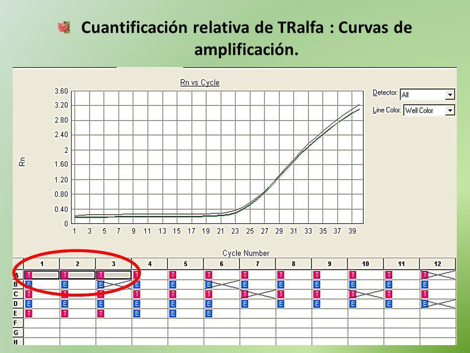 Cuantificación relativa de TRalfa : Curvas de amplificación.