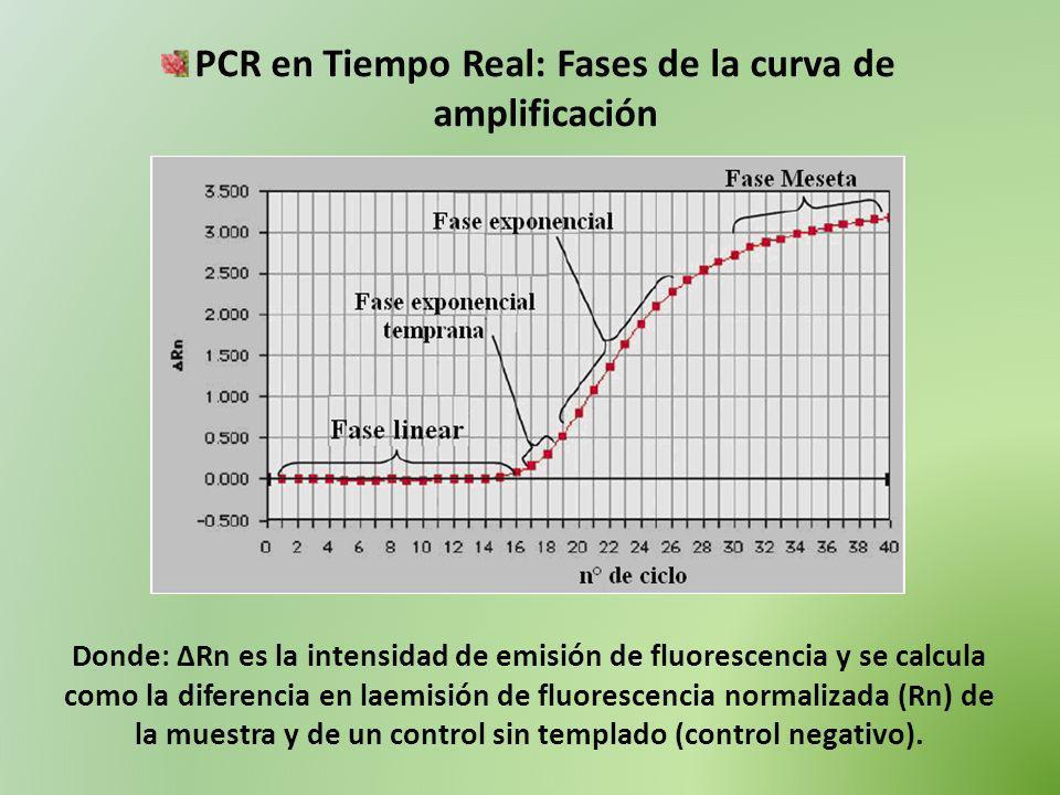PCR en Tiempo Real: Fases de la curva de amplificación