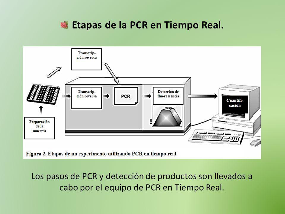 Etapas de la PCR en Tiempo Real.