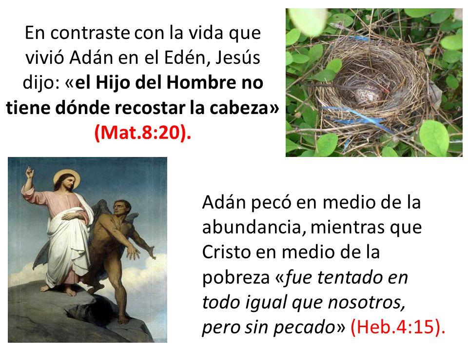 En contraste con la vida que vivió Adán en el Edén, Jesús dijo: «el Hijo del Hombre no tiene dónde recostar la cabeza» (Mat.8:20).