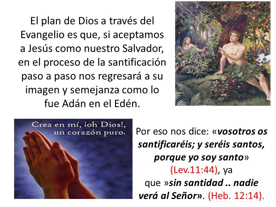 El plan de Dios a través del Evangelio es que, si aceptamos a Jesús como nuestro Salvador, en el proceso de la santificación paso a paso nos regresará a su imagen y semejanza como lo fue Adán en el Edén.