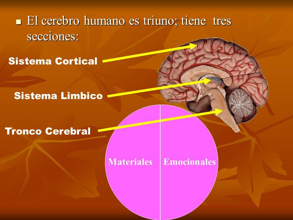 El cerebro humano es triuno; tiene tres secciones: