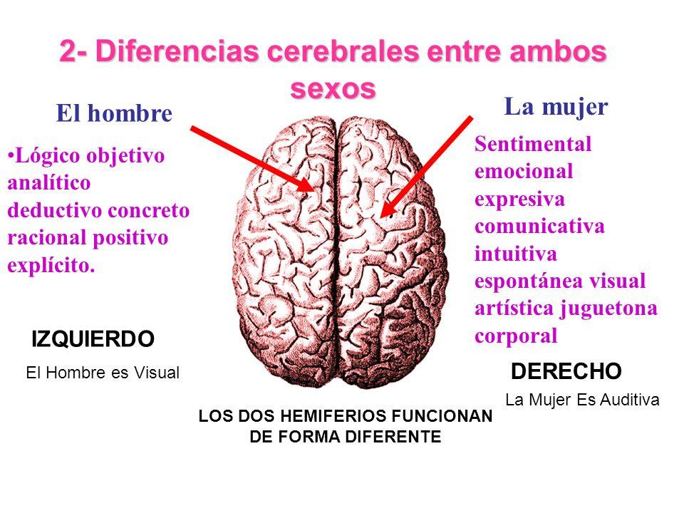 2- Diferencias cerebrales entre ambos sexos