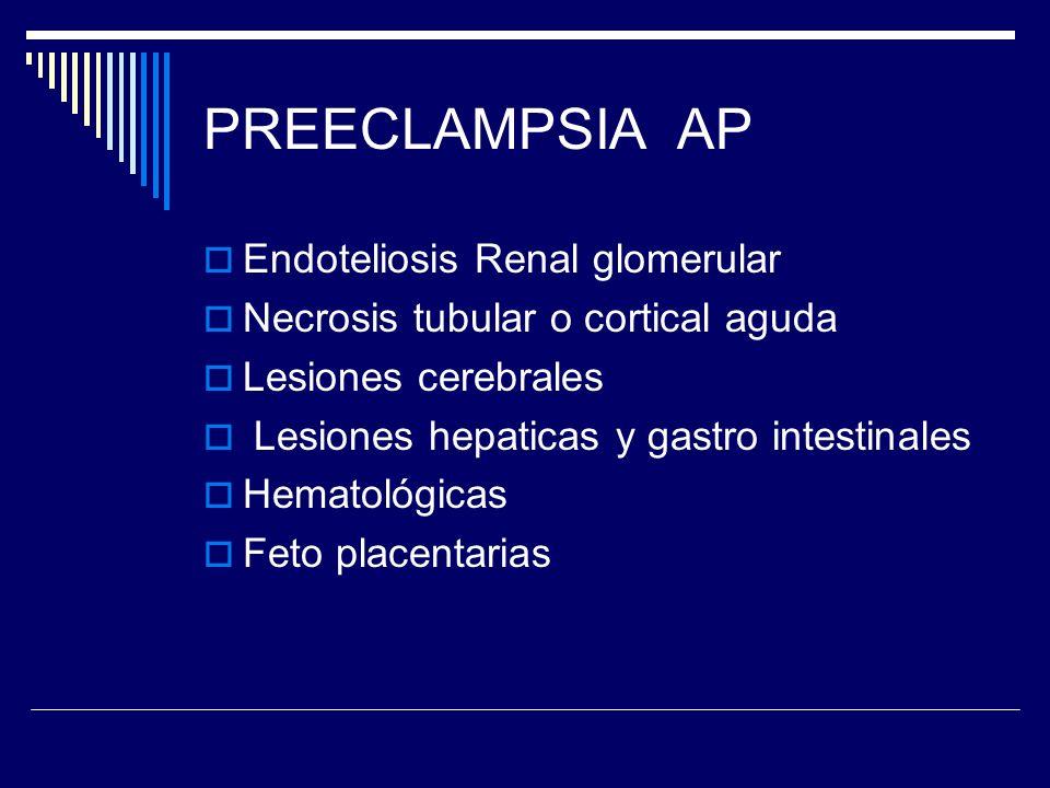 PREECLAMPSIA AP Endoteliosis Renal glomerular