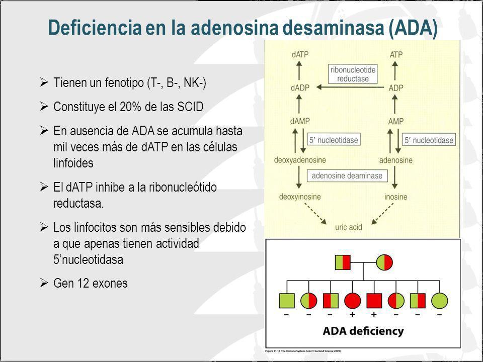 Deficiencia en la adenosina desaminasa (ADA)