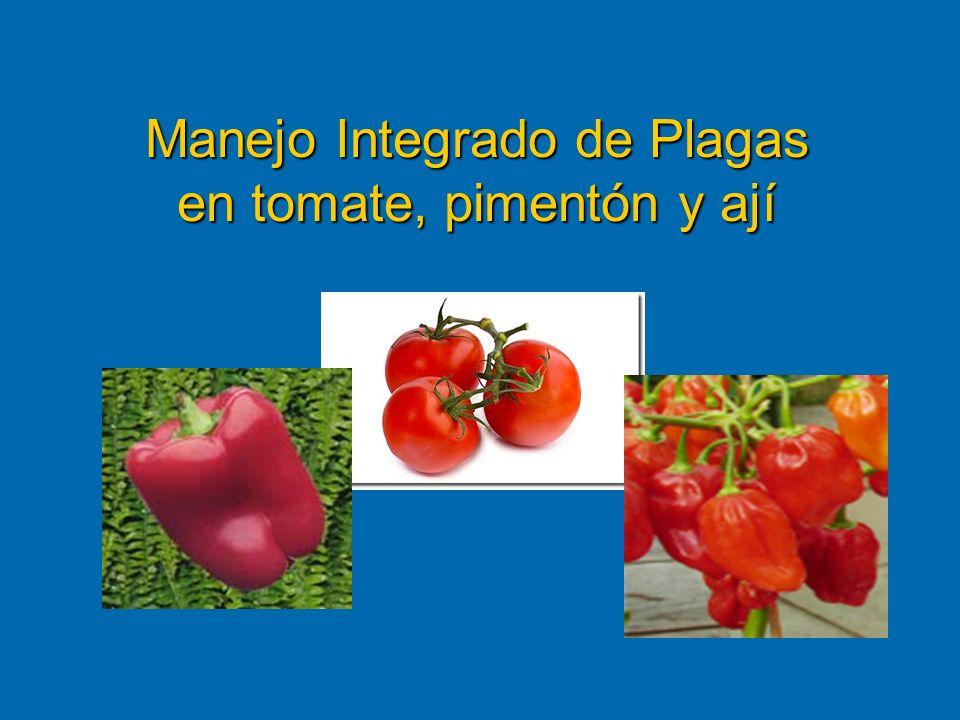 Manejo Integrado de Plagas en tomate, pimentón y ají