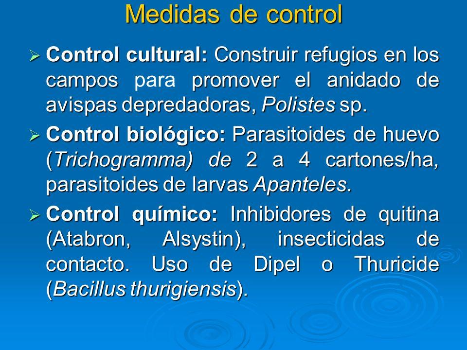 Medidas de control Control cultural: Construir refugios en los campos para promover el anidado de avispas depredadoras, Polistes sp.