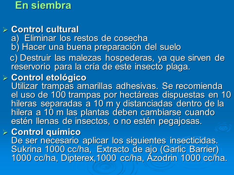 En siembra Control cultural a) Eliminar los restos de cosecha b) Hacer una buena preparación del suelo.