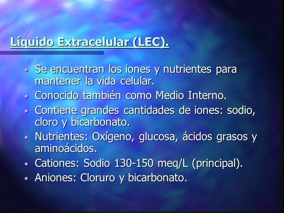 Líquido Extracelular (LEC).