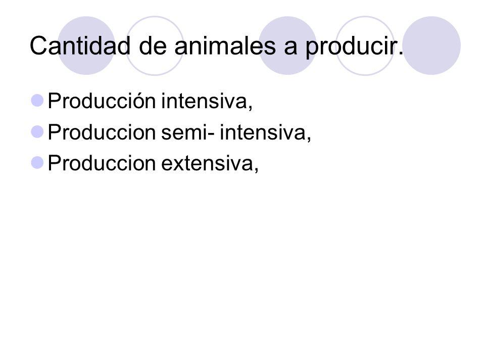 Cantidad de animales a producir.