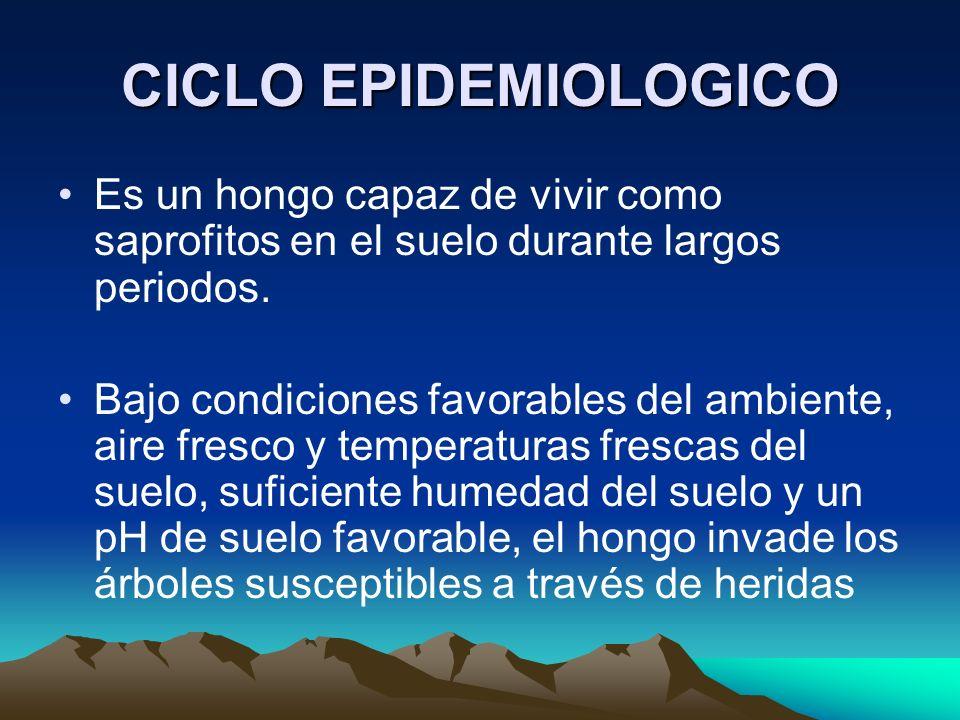 CICLO EPIDEMIOLOGICO Es un hongo capaz de vivir como saprofitos en el suelo durante largos periodos.