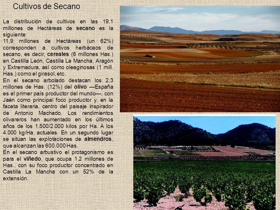 Cultivos de Secano La distribución de cultivos en las 19,1 millones de Hectáreas de secano es la siguiente: