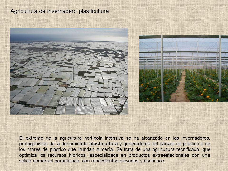 Agricultura de invernadero plasticultura