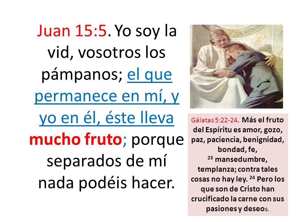 Juan 15:5. Yo soy la vid, vosotros los pámpanos; el que permanece en mí, y yo en él, éste lleva mucho fruto; porque separados de mí nada podéis hacer.