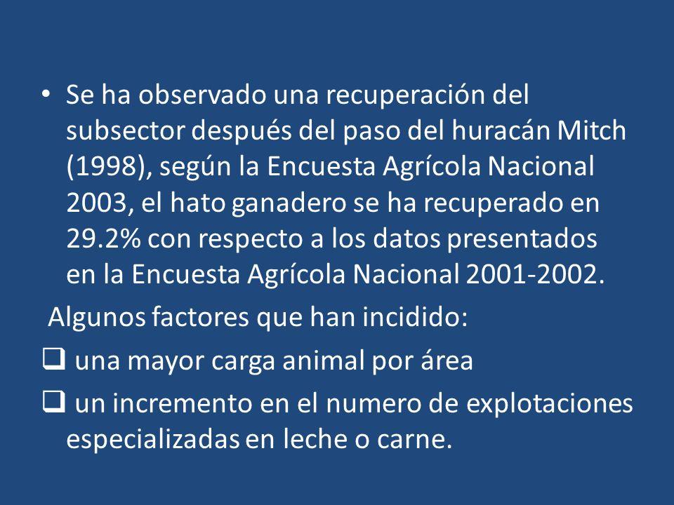 Se ha observado una recuperación del subsector después del paso del huracán Mitch (1998), según la Encuesta Agrícola Nacional 2003, el hato ganadero se ha recuperado en 29.2% con respecto a los datos presentados en la Encuesta Agrícola Nacional 2001-2002.