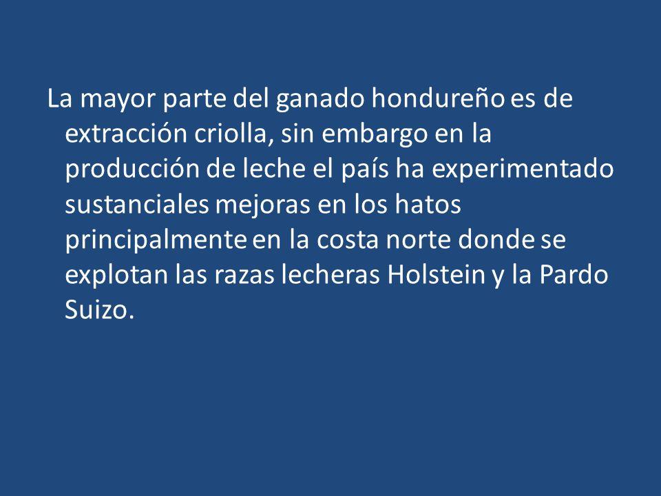 La mayor parte del ganado hondureño es de extracción criolla, sin embargo en la producción de leche el país ha experimentado sustanciales mejoras en los hatos principalmente en la costa norte donde se explotan las razas lecheras Holstein y la Pardo Suizo.