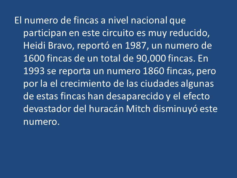 El numero de fincas a nivel nacional que participan en este circuito es muy reducido, Heidi Bravo, reportó en 1987, un numero de 1600 fincas de un total de 90,000 fincas.
