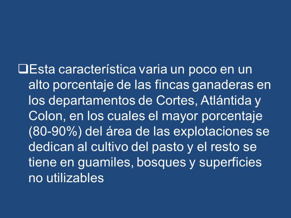 Esta característica varia un poco en un alto porcentaje de las fincas ganaderas en los departamentos de Cortes, Atlántida y Colon, en los cuales el mayor porcentaje (80-90%) del área de las explotaciones se dedican al cultivo del pasto y el resto se tiene en guamiles, bosques y superficies no utilizables