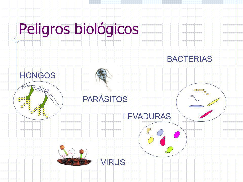 Peligros biológicos BACTERIAS HONGOS PARÁSITOS LEVADURAS VIRUS