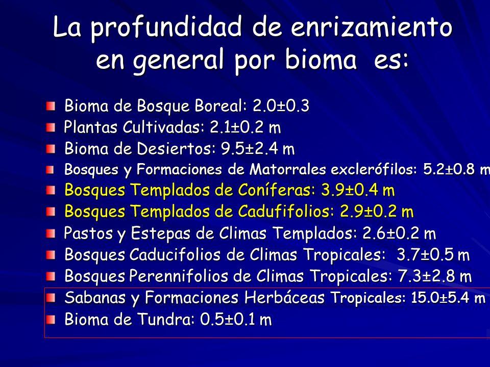 La profundidad de enrizamiento en general por bioma es: