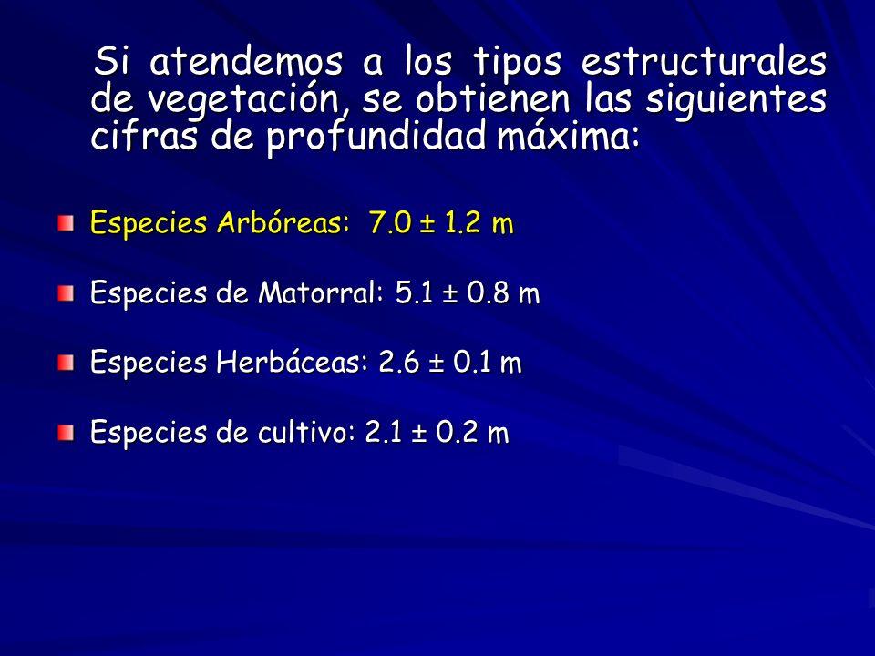 Si atendemos a los tipos estructurales de vegetación, se obtienen las siguientes cifras de profundidad máxima: