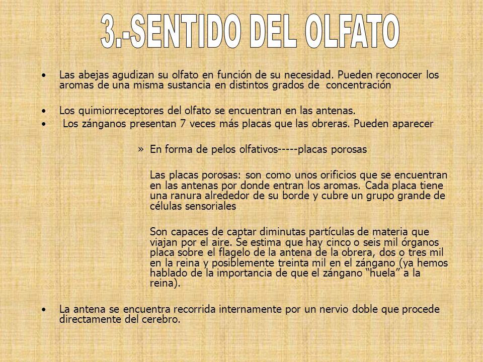 3.-SENTIDO DEL OLFATO