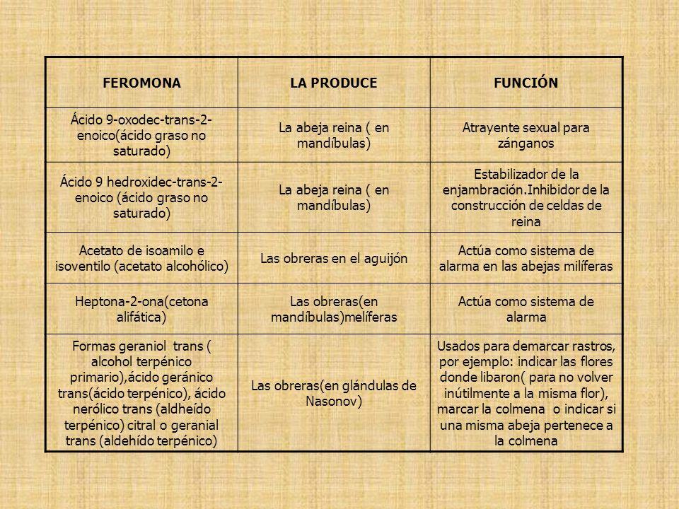FEROMONA LA PRODUCE FUNCIÓN