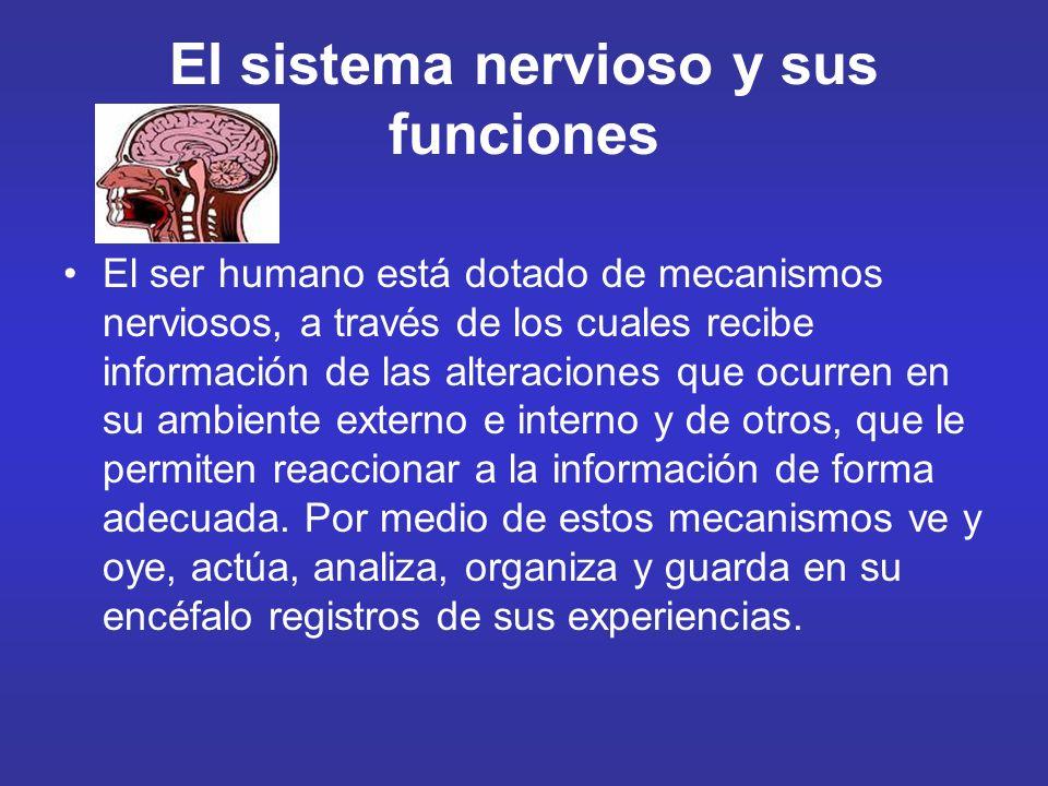 El sistema nervioso y sus funciones