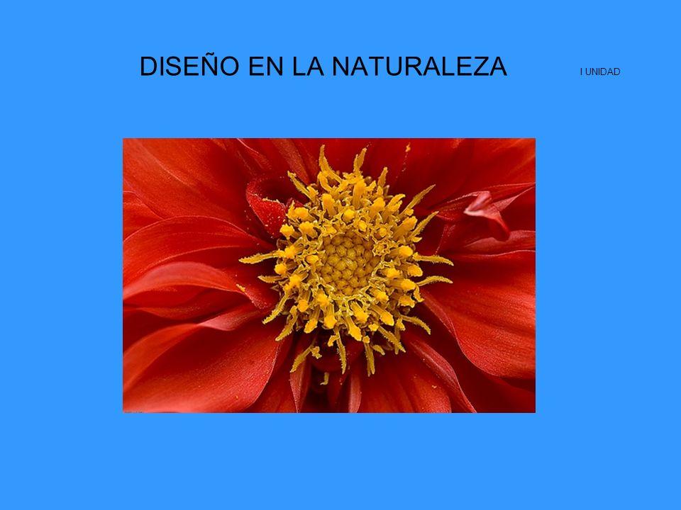 DISEÑO EN LA NATURALEZA I UNIDAD