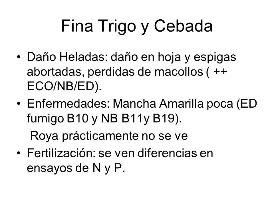 Fina Trigo y CebadaDaño Heladas: daño en hoja y espigas abortadas, perdidas de macollos ( ++ ECO/NB/ED).