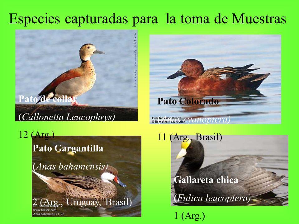 Especies capturadas para la toma de Muestras