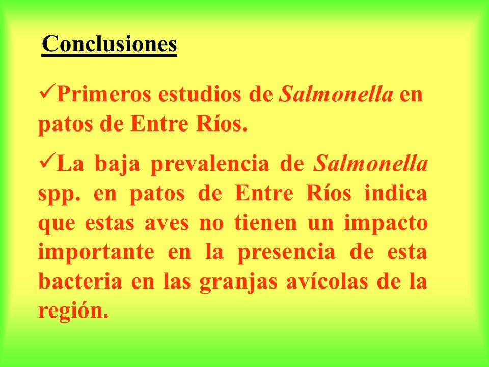 Conclusiones Primeros estudios de Salmonella en patos de Entre Ríos.
