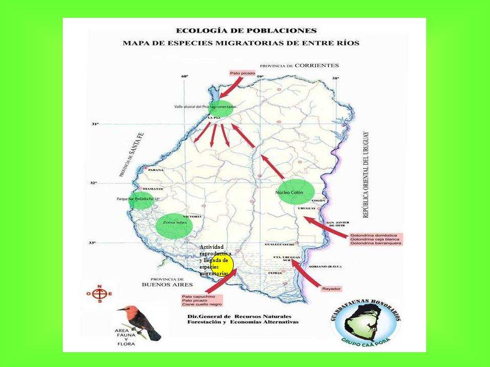 Actividad reproductiva y llegada de especies migratorias
